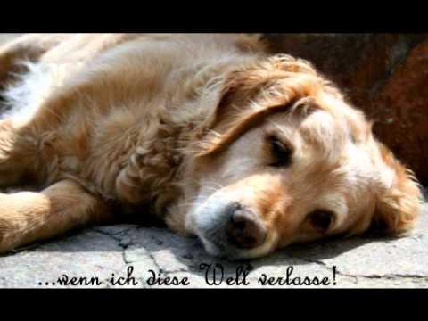 Abschied Nehmen Ein Hund Erzählt Vom Tod