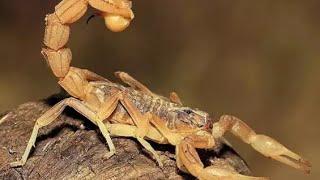 Землёй правили доисторические насекомые