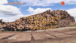 «Зелёное золото» Сибири | Бизнес | Телеканал «Страна»