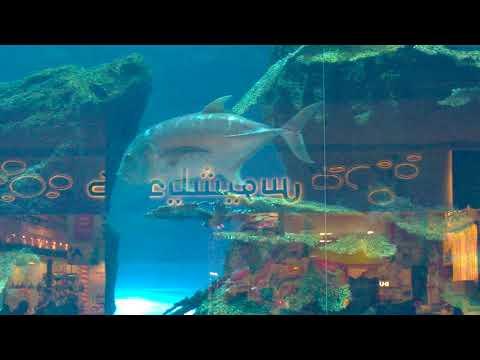 Dubai Mall aquarium outside
