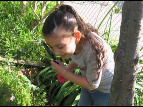 Junipero Serra School Gardening Program
