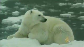 ذوبان الجليد في القطب الشمالي بين العامل البشري والطبيعي