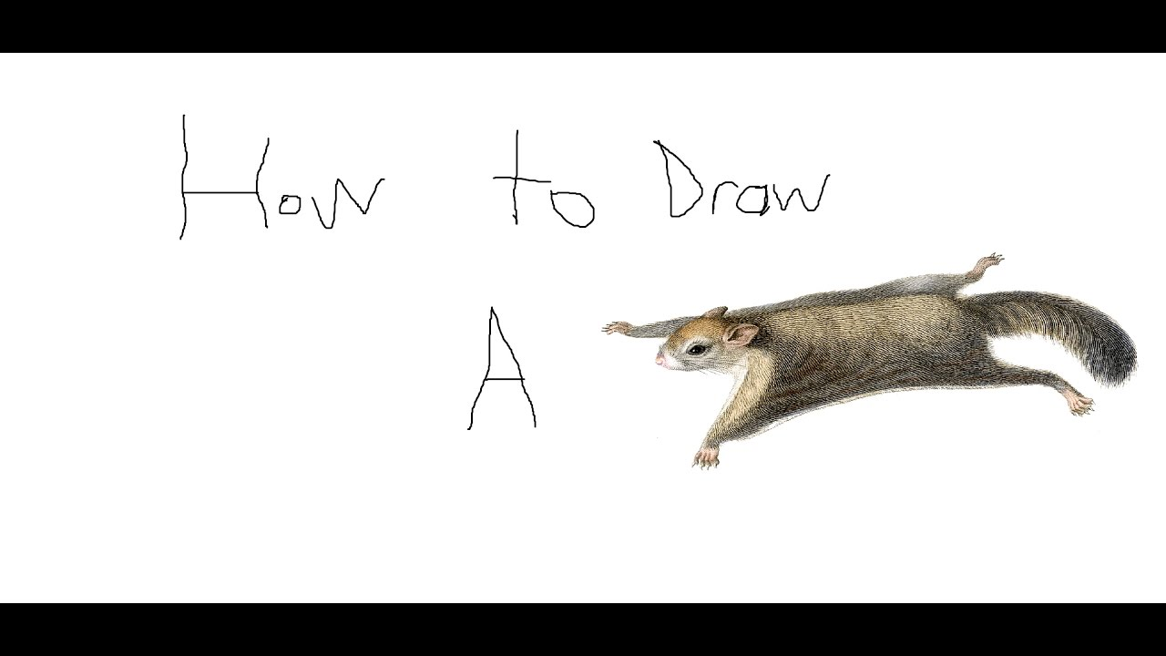 How To Draw A Flying Squirrel