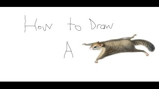 How To Draw A Flying Squirrel Youtube
