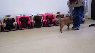 犬の幼稚園 ディープくんとトレーニング thumbnail