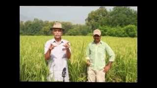 Sagunra Rice Technique Documentary - SRT Marathi (Part 1)