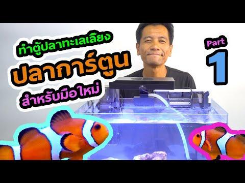 ตู้ทะเล EP.5 : มือใหม่เลี้ยงปลาการ์ตูน อุปกรณ์ตั้งตู้ทะเล การรันน้ำ การลงปลา Part 1