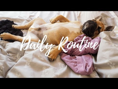 STEVEN'S DAILY ROUTINE | OUR FRENCH BULLDOG!