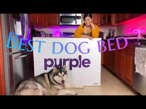 purple-matress-dog-bed-review