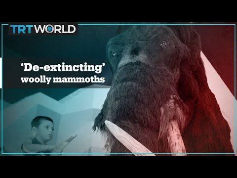 Josh Richards Is Bringing Back The Woolly Mammoth