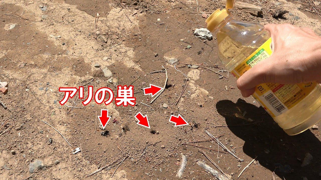 アリの巣穴にお酢をぶちまけると・・・