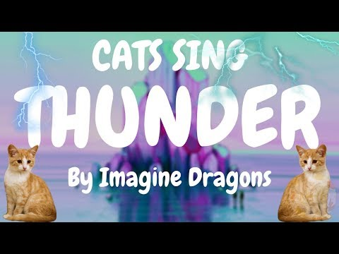 Cats Sing Thunder by Imagine Dragons | Cats Singing Song