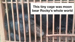 Remembering Rocky: 72 hours of kindness in a lifetime of pain