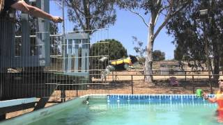 Iq K9 Training | Learning How To Dock Dive Video #2 | Small Dog Training | Oceanside