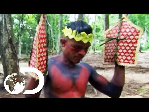 The Sateré-Mawé Tribe Subject Themselves To Over 120 Bullet Ant Stings | Wildest Latin America