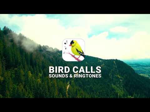 Lintujen Lauluäänet