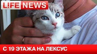 В Новосибирске котенок выжил, упав на «Лексус» с 19 этажа