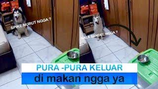 SPIKE &amp NALA di tinggal di kamar sama MAKANAN ( #BEPATIENTCHALLENGE ) - VLOG
