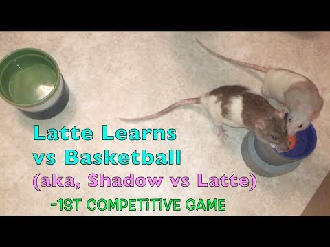 Shadow vs Latte (First Attempt At 1 on 1 Basketball)