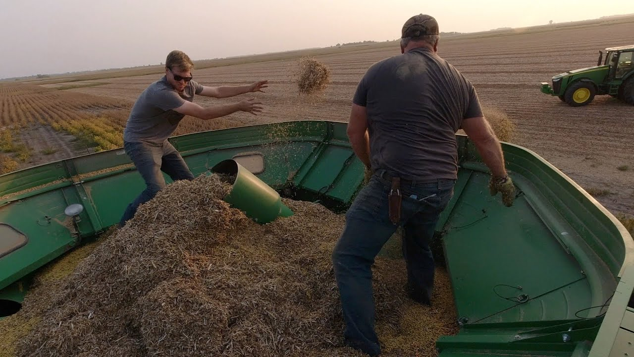 Soybean harvest was going well, until....