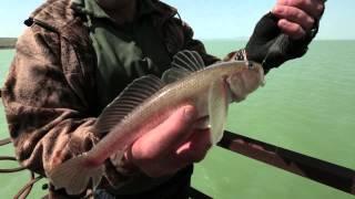 Диалоги о рыбалке. Ловля кутума. Азербайджан