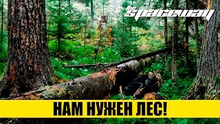 НАМ НУЖЕН ЛЕС!