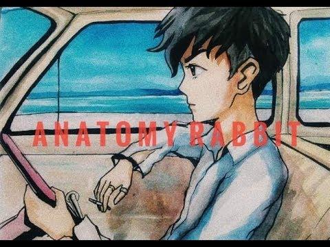 ขับรถเล่น ANATOMY RABBIT