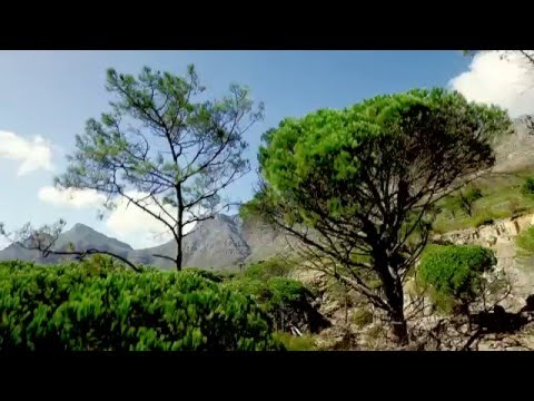 Table Mountain National Park  | Cape Town | Inspire 1 | Aerial Stock Footage