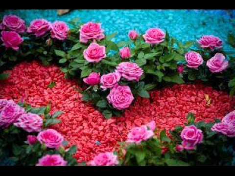 Beautiful Voice Surah Fathia and Char 4 Qul