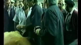 marche veaux gras costaros 1990