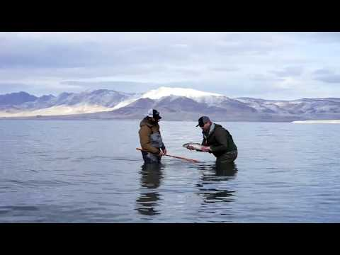 Lost Coast Outfitters Presents : Fly Fishing Pyramid Lake