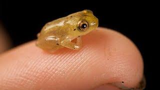 Die kleinsten Tiere der Welt
