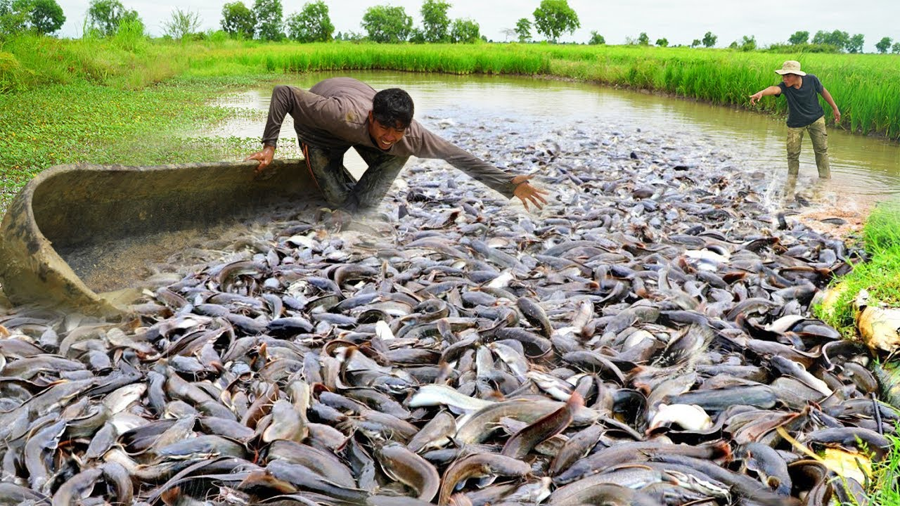 OMG! Unbelievable This Fishing Under Boat Palm tree - 2brother Catching & Catfish in Season Dry