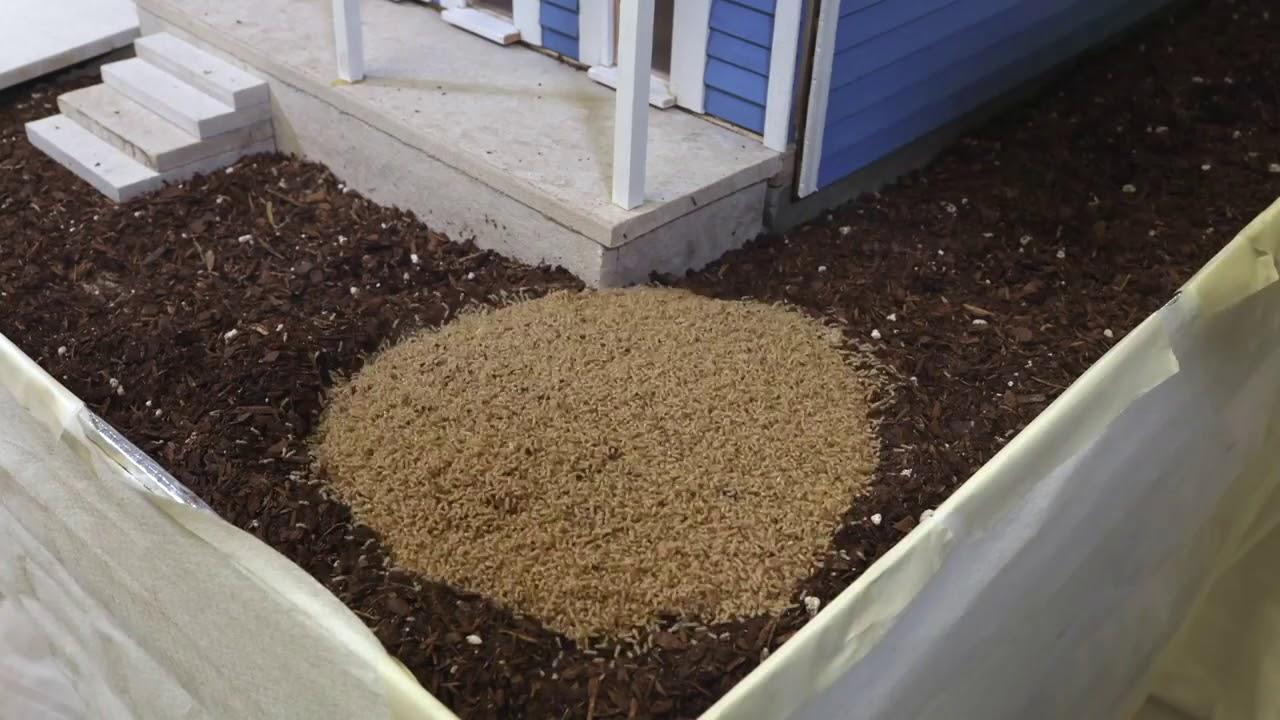 Weekly Wellness Tip |Termites Eating House