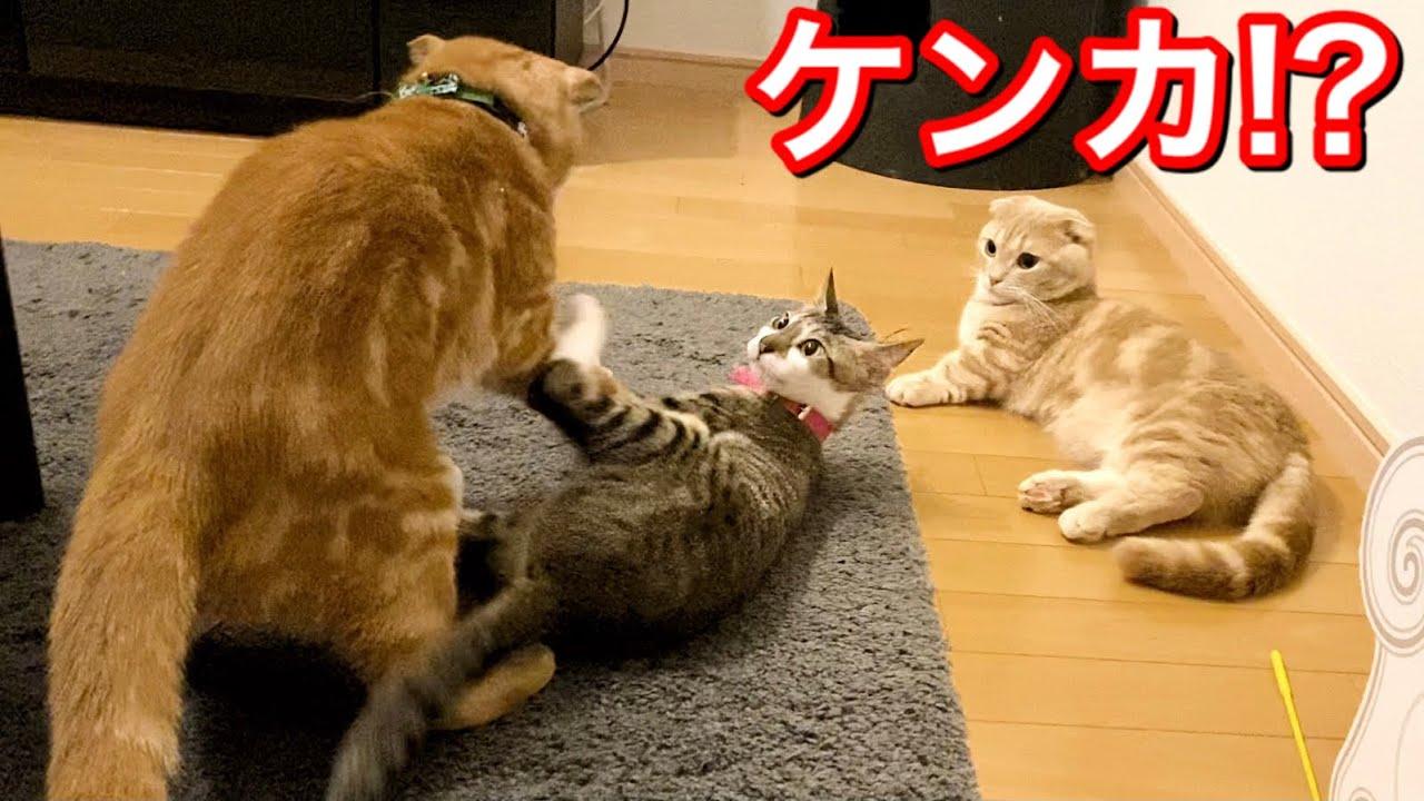 喧嘩するほど仲が良い兄妹猫がこちら