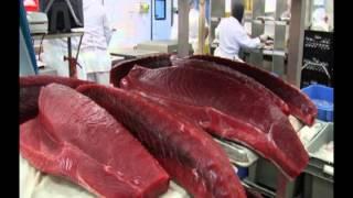 Honolulu Fish Co. Processing