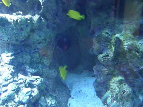 Aquarium Palm Beach