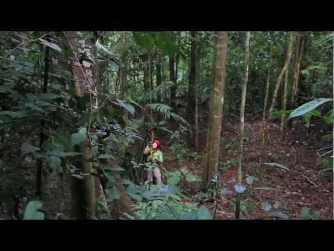 Costa Rica Tree Climbing '13