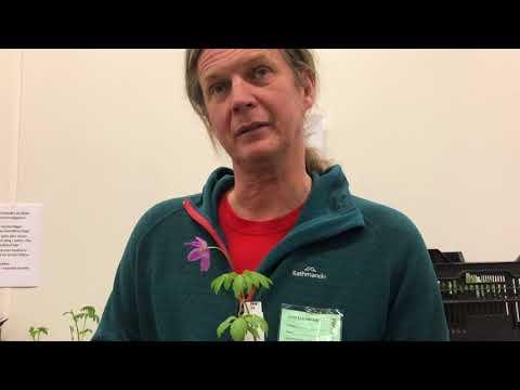 Larz Danielsson från SPEZIALPLANT har valt ut 3 favoritväxter just nu och hur du odlar dem