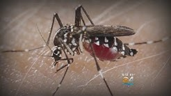 Miami-Dade Mosquito Control Aggressively Hunting Potential Zika Carriers