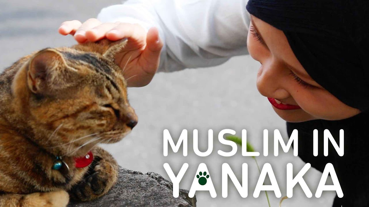 Are Cats Halal To Keep