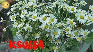 Флористика !VLOG:  Рабочие будни флориста 24! ♥  FLORISTIC ♥ (Букеты,композиция,витрина)  ♥ ksu66a