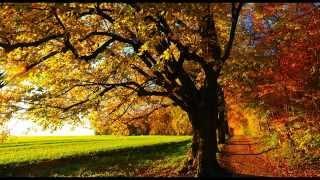 Natural Sounds -  birds singing in forest - Morning birdsong