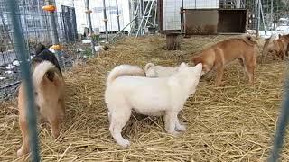 10月5日~27日に産まれた仔犬たちが集まりました。