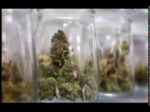 CNMI Senate Considering Bill That Would Legalize Marijuana...