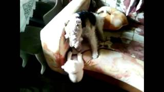 Кошки против собак (финал)