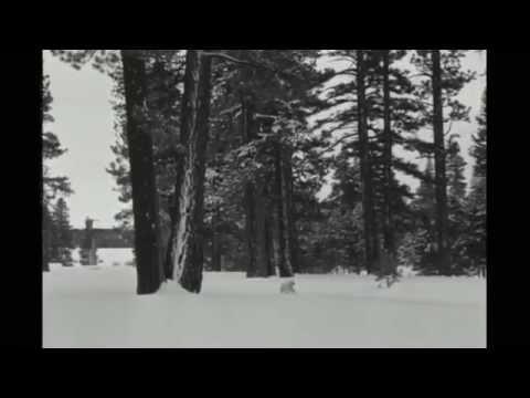Delorentos - Winter Song