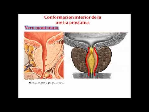 función de la próstata en el 39