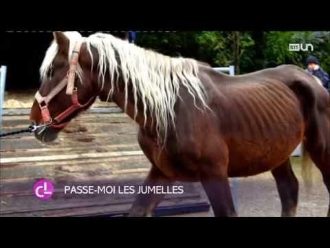 Genève: L'association «Le Refuge De Darwyn» Soigne Les Chevaux Maltraités