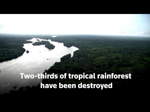 Two-thirds of tropical rainforest destroyed or degraded globally, NGO says